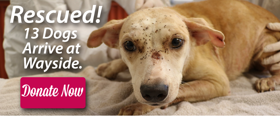 Donate now to help these innocent animals.