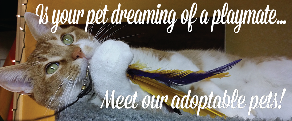 Meet our adoptable pets here!
